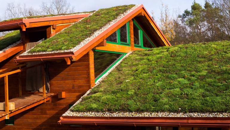 7 green ideas to consider when buying a home